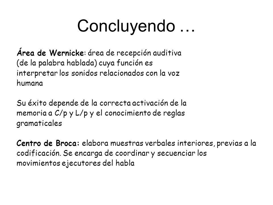 Concluyendo … Área de Wernicke: área de recepción auditiva