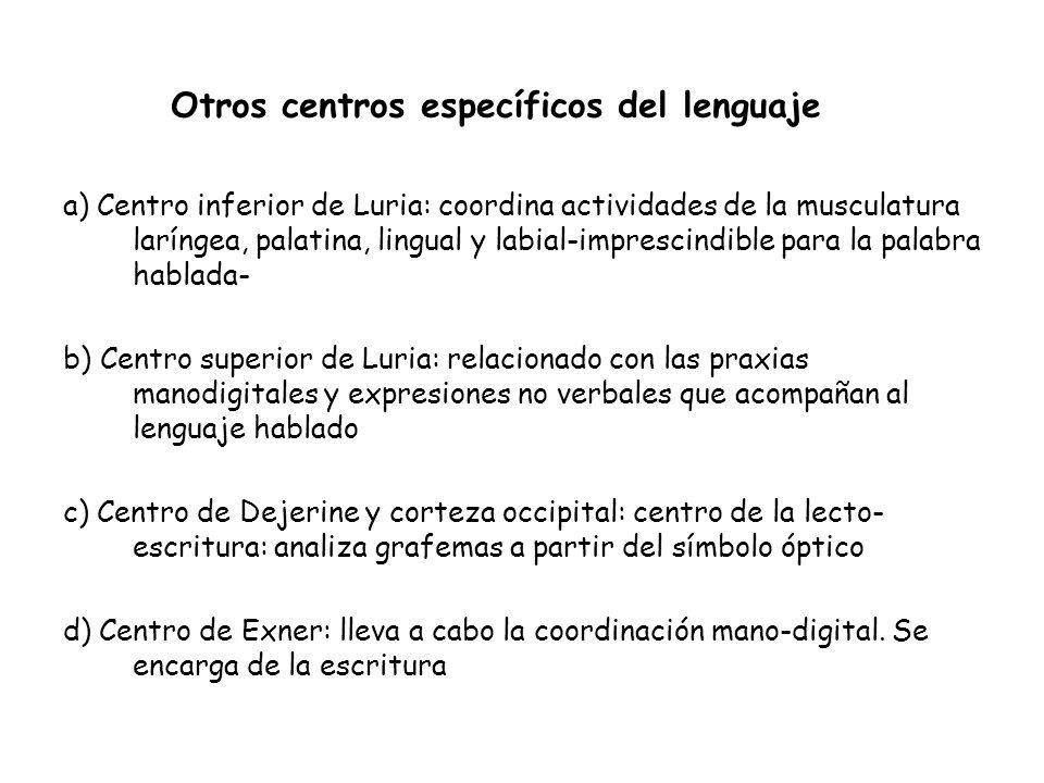 Otros centros específicos del lenguaje