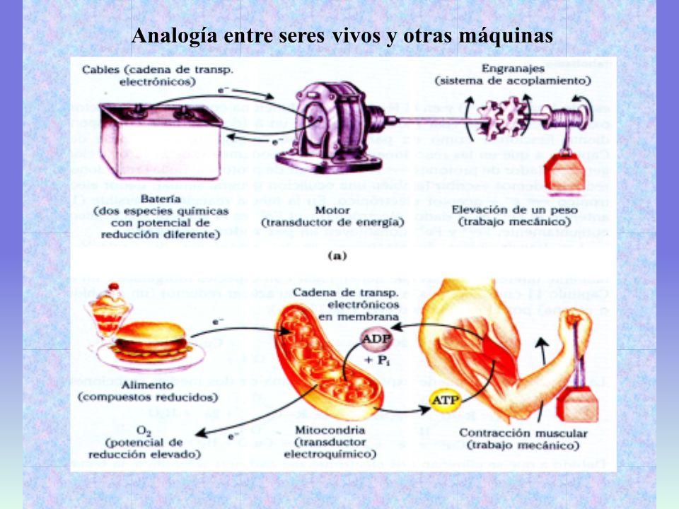 Analogía entre seres vivos y otras máquinas