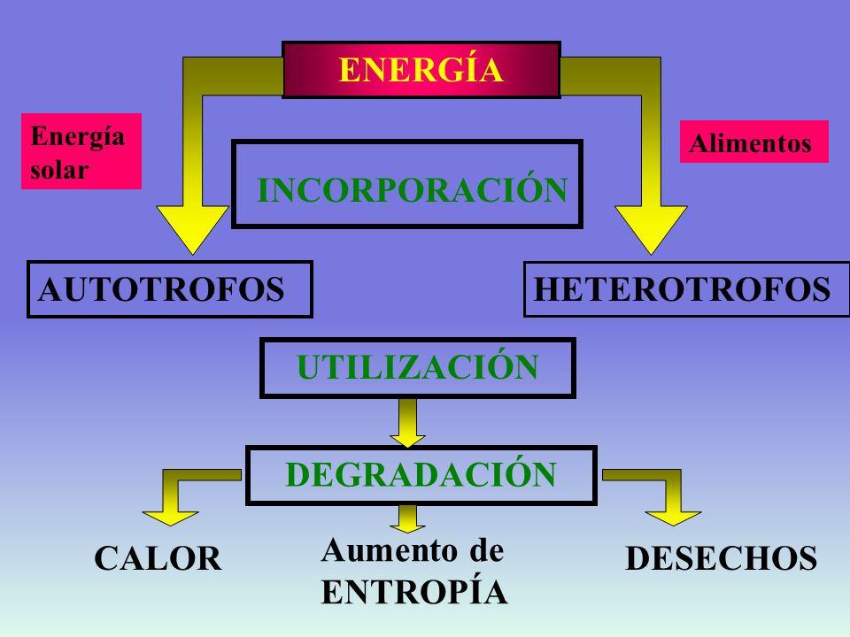 ENERGÍA UTILIZACIÓN DEGRADACIÓN