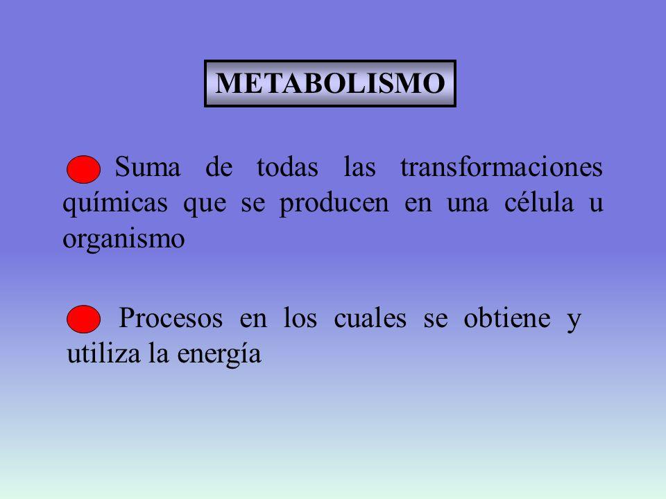 METABOLISMO Suma de todas las transformaciones químicas que se producen en una célula u organismo.