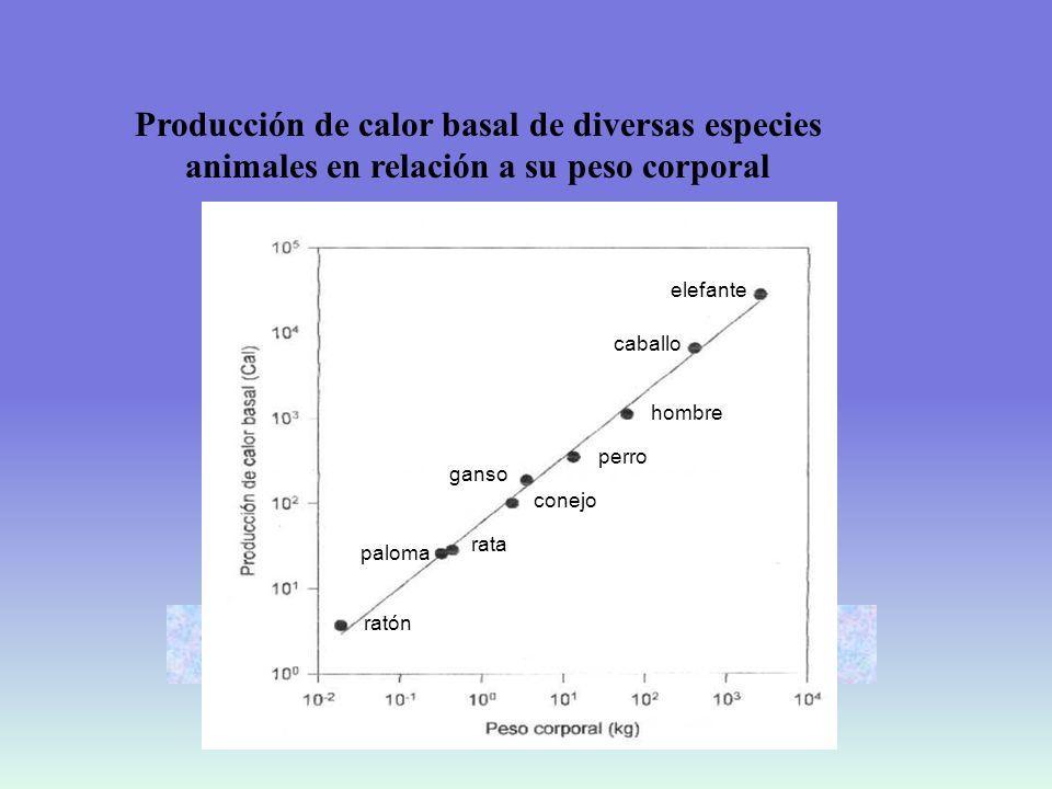 Producción de calor basal de diversas especies animales en relación a su peso corporal