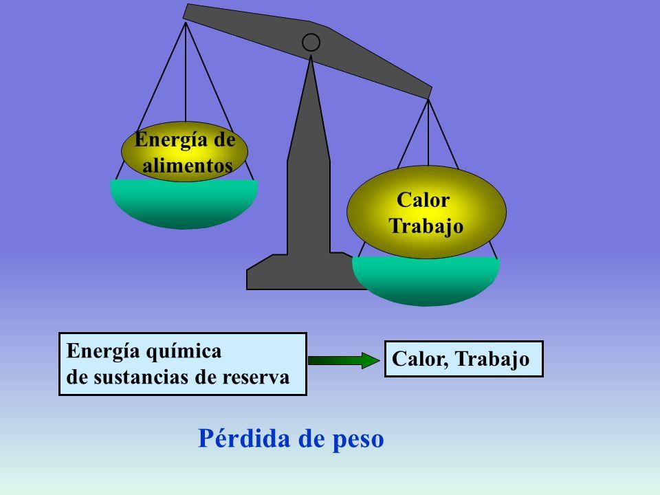 Pérdida de peso Energía de alimentos Calor Trabajo Energía química