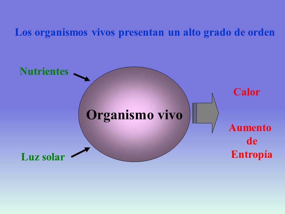 Organismo vivo Los organismos vivos presentan un alto grado de orden