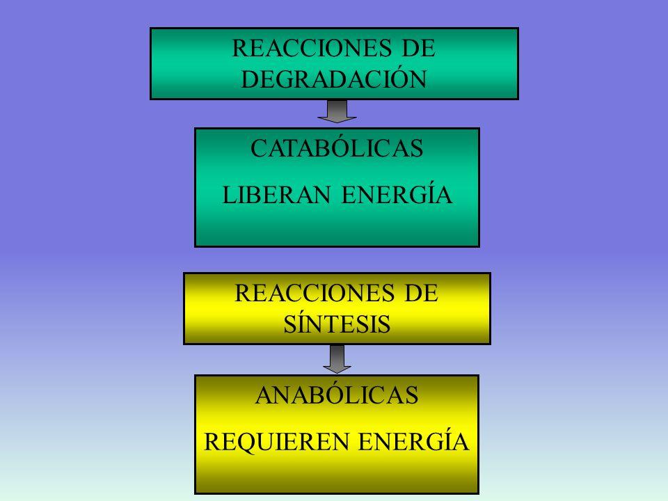 REACCIONES DE DEGRADACIÓN