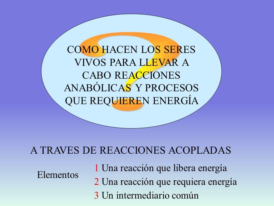 COMO HACEN LOS SERES VIVOS PARA LLEVAR A CABO REACCIONES ANABÓLICAS Y PROCESOS QUE REQUIEREN ENERGÍA.