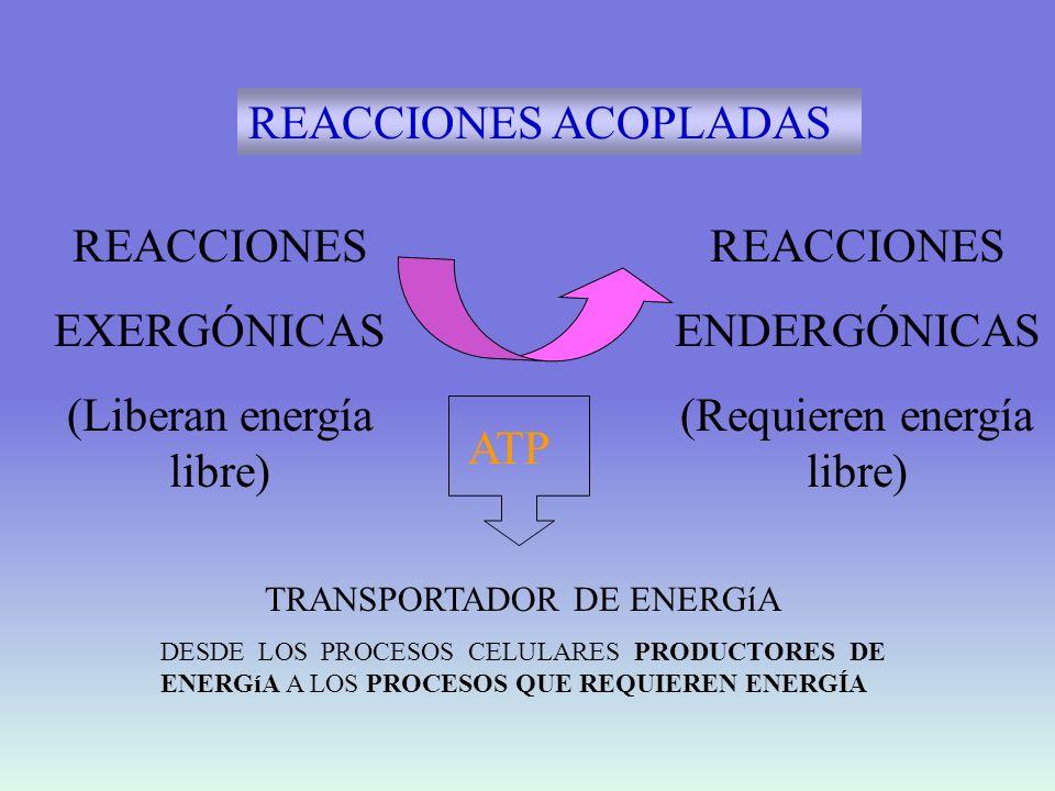 (Liberan energía libre) REACCIONES ENDERGÓNICAS