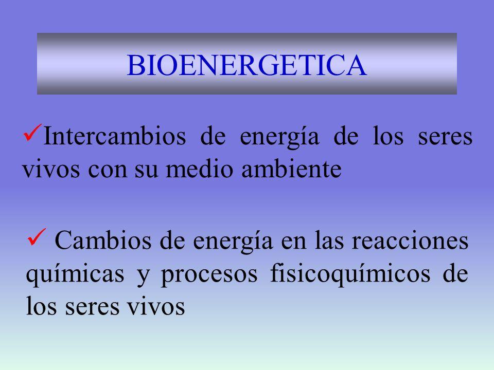 BIOENERGETICA Intercambios de energía de los seres vivos con su medio ambiente.