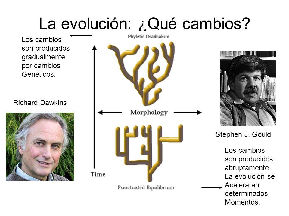La evolución: ¿Qué cambios