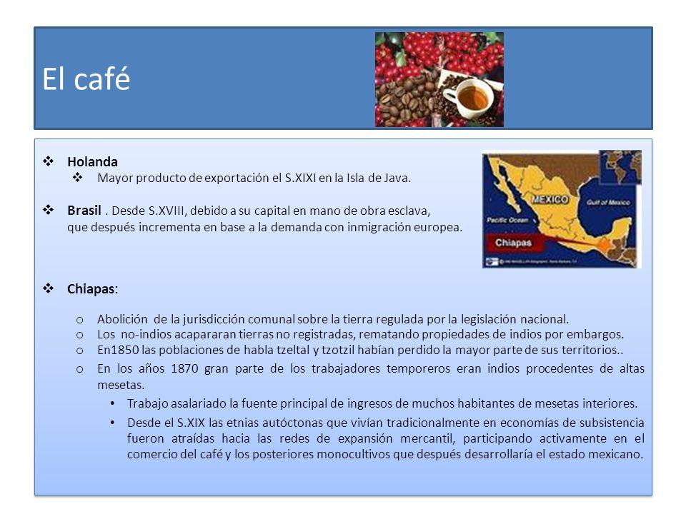 El caféHolanda. Mayor producto de exportación el S.XIXI en la Isla de Java. Brasil . Desde S.XVIII, debido a su capital en mano de obra esclava,