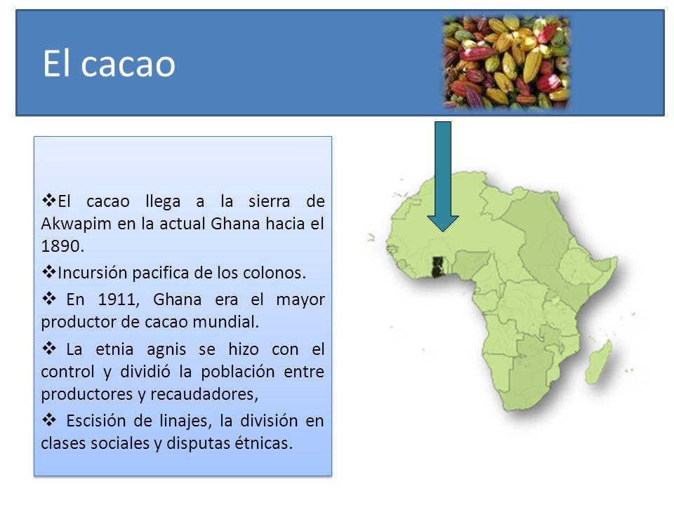 El cacao El cacao llega a la sierra de Akwapim en la actual Ghana hacia el 1890. Incursión pacifica de los colonos.