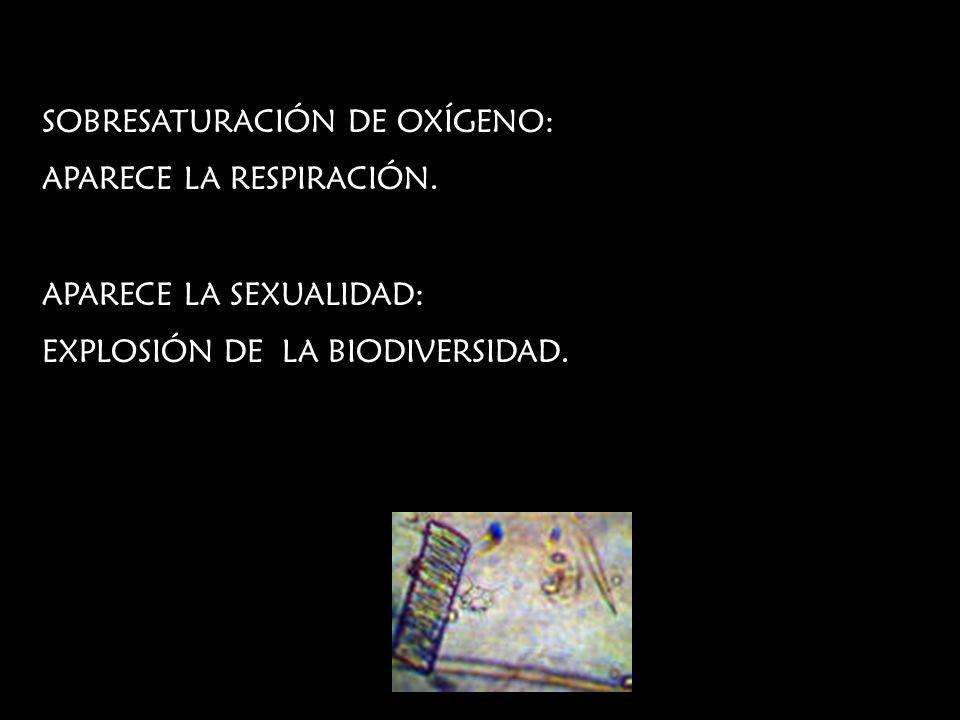 SOBRESATURACIÓN DE OXÍGENO: