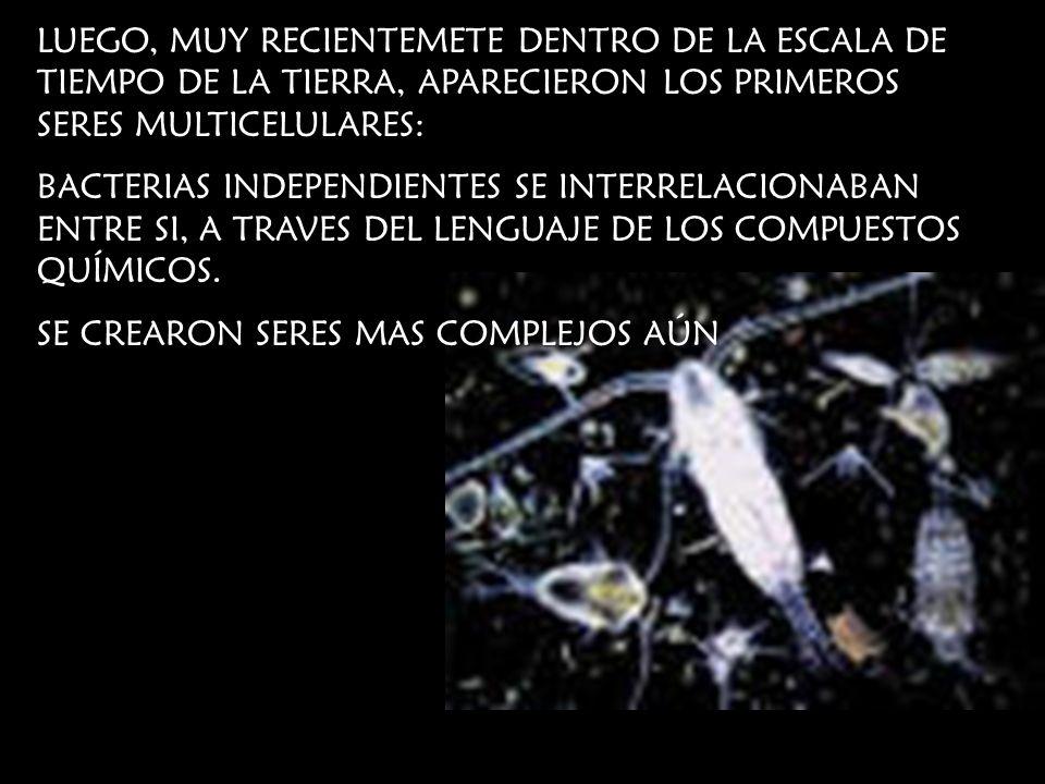 LUEGO, MUY RECIENTEMETE DENTRO DE LA ESCALA DE TIEMPO DE LA TIERRA, APARECIERON LOS PRIMEROS SERES MULTICELULARES: