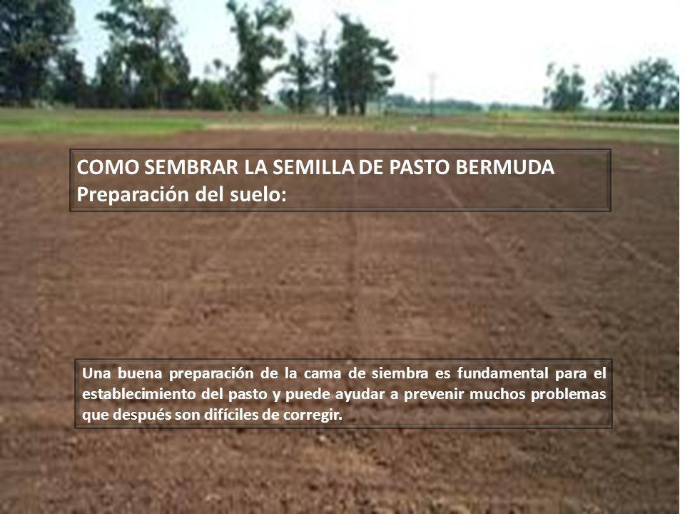 COMO SEMBRAR LA SEMILLA DE PASTO BERMUDA Preparación del suelo: