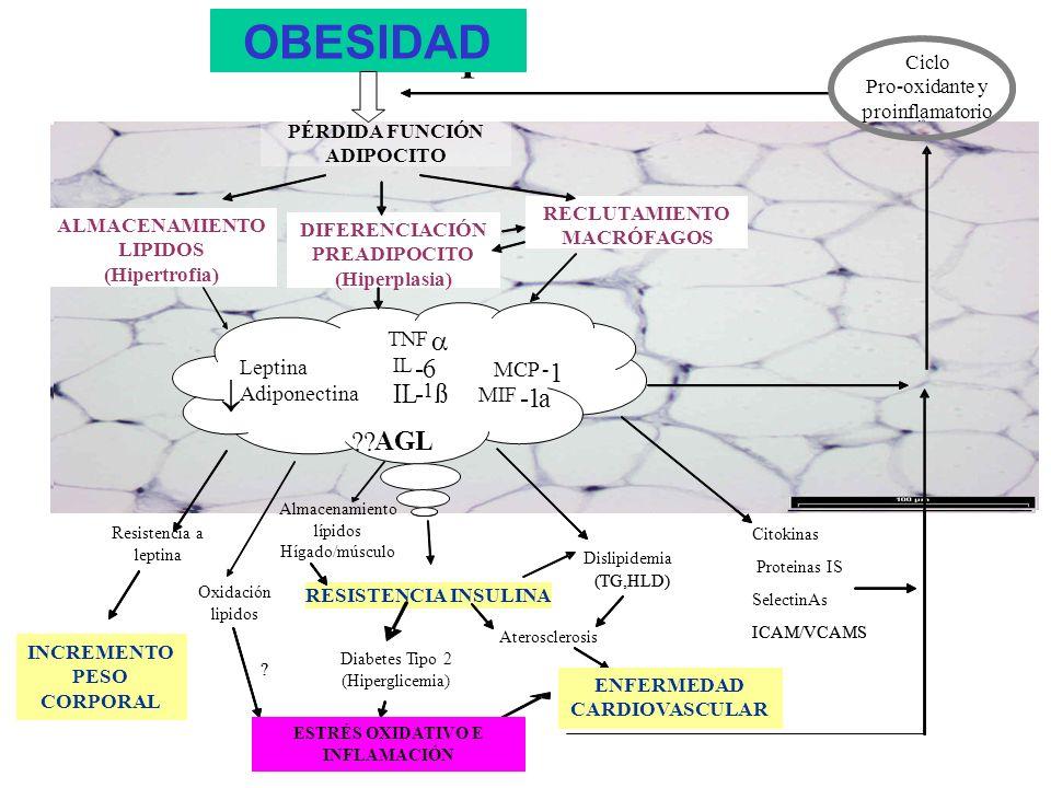 OBESIDAD OBESITY   TNF a IL - 6 1 ß MCP MIF FFA Leptin