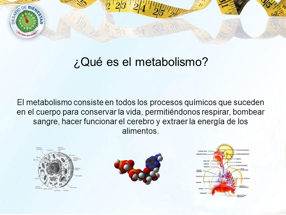 ¿Qué es el metabolismo