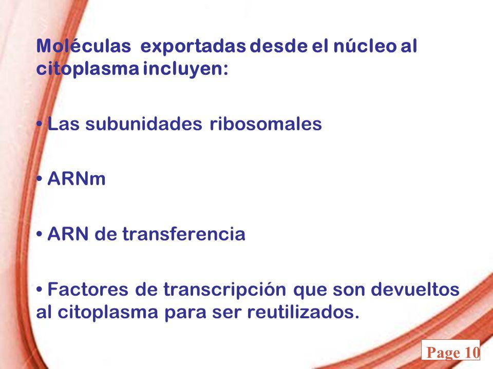 Moléculas exportadas desde el núcleo al citoplasma incluyen: