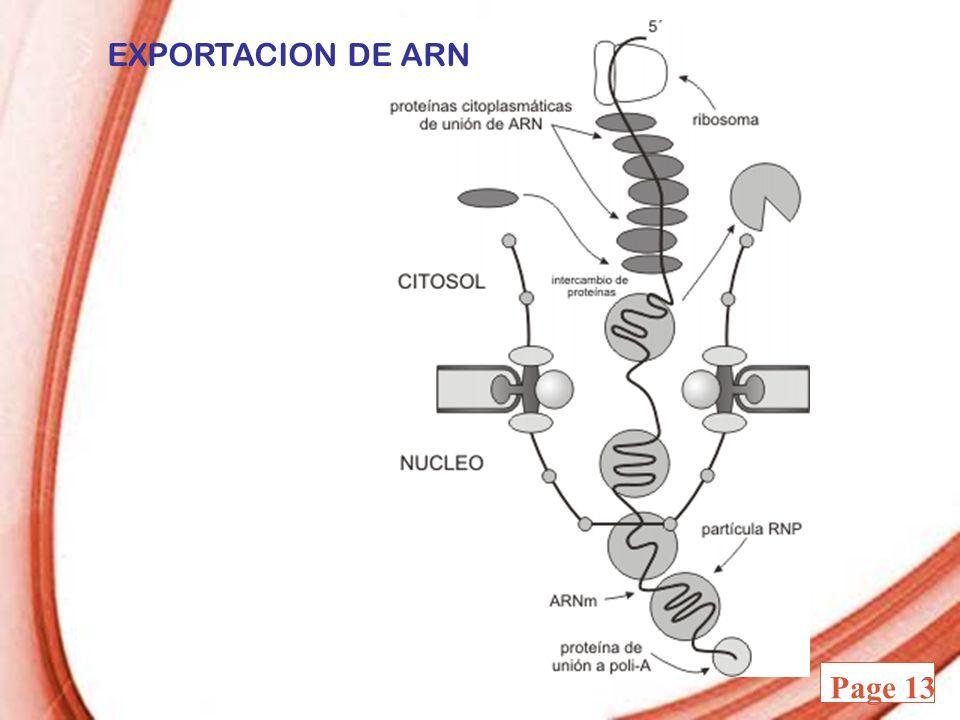 EXPORTACION DE ARN