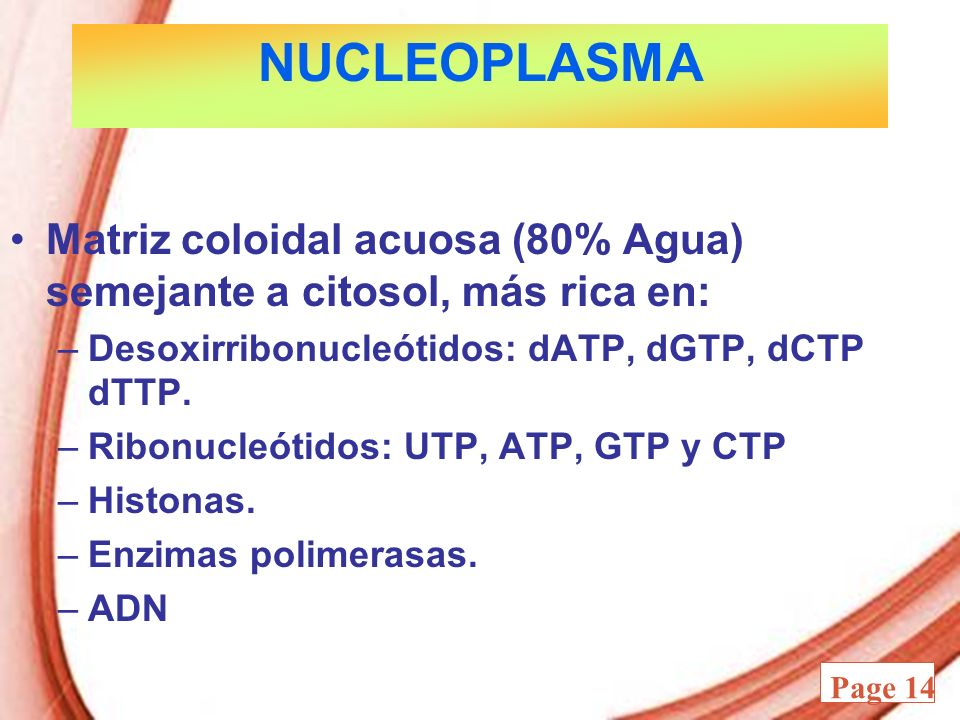 NUCLEOPLASMA Matriz coloidal acuosa (80% Agua) semejante a citosol, más rica en: Desoxirribonucleótidos: dATP, dGTP, dCTP dTTP.