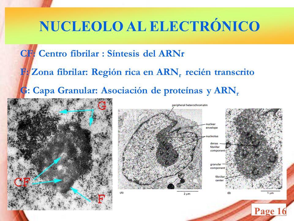NUCLEOLO AL ELECTRÓNICO