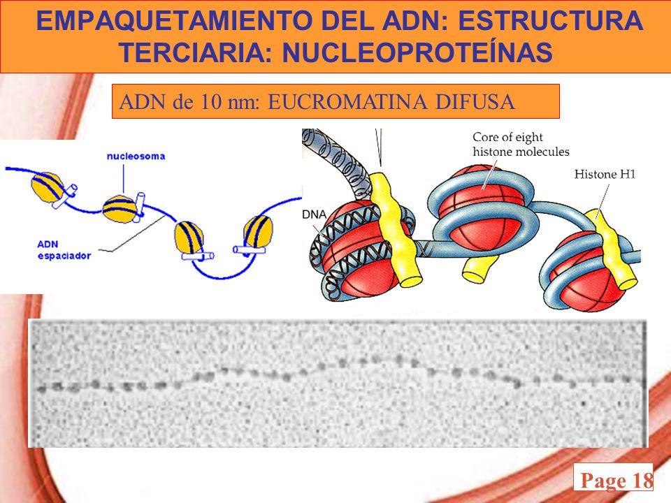 EMPAQUETAMIENTO DEL ADN: ESTRUCTURA TERCIARIA: NUCLEOPROTEÍNAS