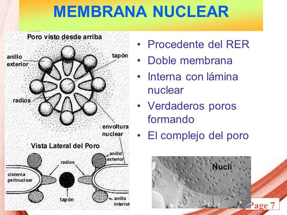 MEMBRANA NUCLEAR Procedente del RER Doble membrana