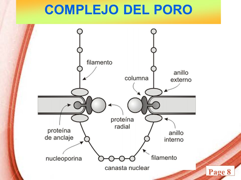 COMPLEJO DEL PORO
