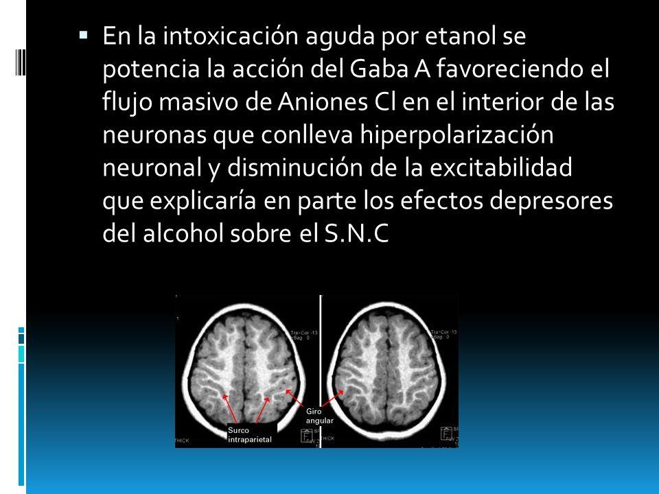 En la intoxicación aguda por etanol se potencia la acción del Gaba A favoreciendo el flujo masivo de Aniones Cl en el interior de las neuronas que conlleva hiperpolarización neuronal y disminución de la excitabilidad que explicaría en parte los efectos depresores del alcohol sobre el S.N.C