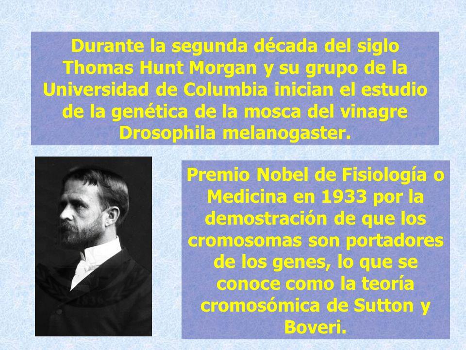 Durante la segunda década del siglo Thomas Hunt Morgan y su grupo de la Universidad de Columbia inician el estudio de la genética de la mosca del vinagre Drosophila melanogaster.