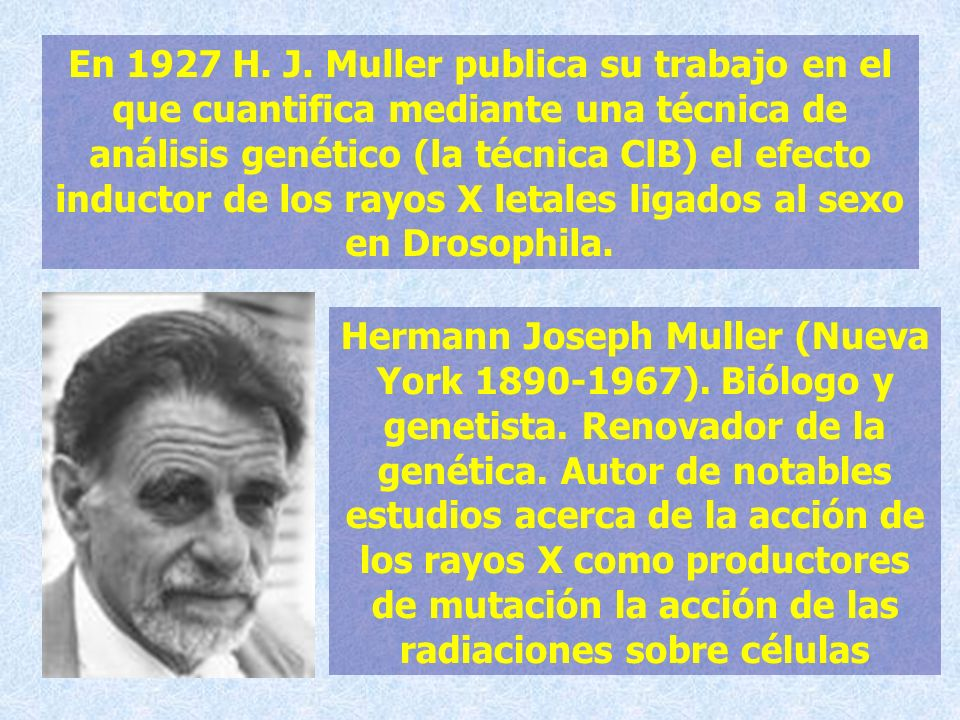 En 1927 H. J. Muller publica su trabajo en el que cuantifica mediante una técnica de análisis genético (la técnica ClB) el efecto inductor de los rayos X letales ligados al sexo en Drosophila.