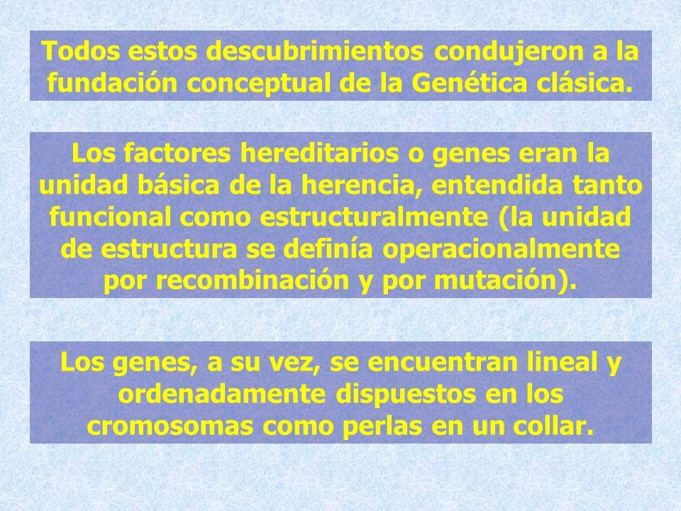 Todos estos descubrimientos condujeron a la fundación conceptual de la Genética clásica.