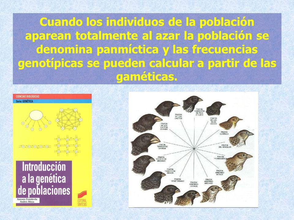 Cuando los individuos de la población aparean totalmente al azar la población se denomina panmíctica y las frecuencias genotípicas se pueden calcular a partir de las gaméticas.