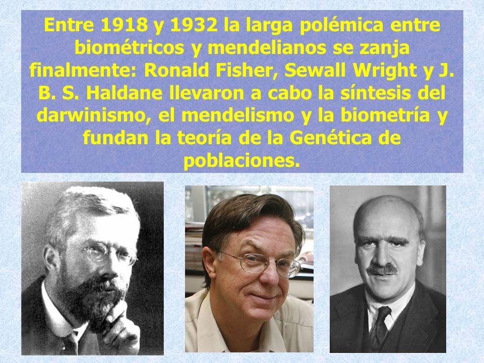 Entre 1918 y 1932 la larga polémica entre biométricos y mendelianos se zanja finalmente: Ronald Fisher, Sewall Wright y J.