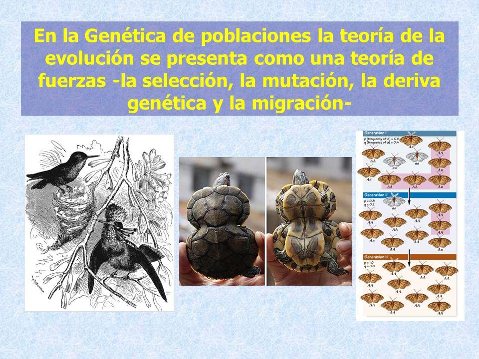En la Genética de poblaciones la teoría de la evolución se presenta como una teoría de fuerzas -la selección, la mutación, la deriva genética y la migración-