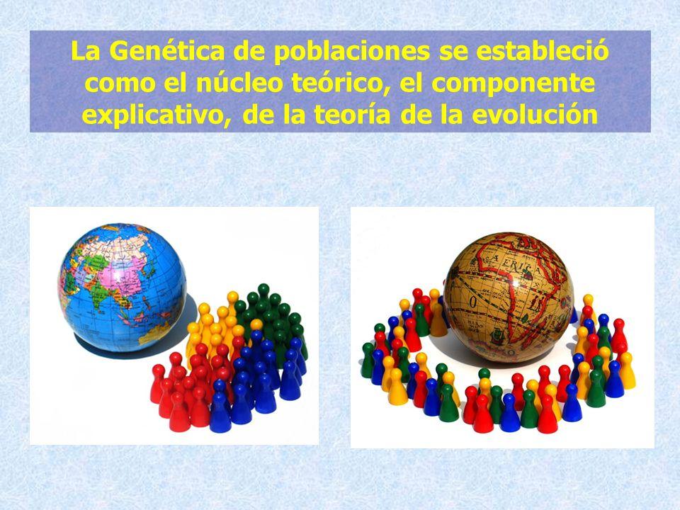La Genética de poblaciones se estableció como el núcleo teórico, el componente explicativo, de la teoría de la evolución