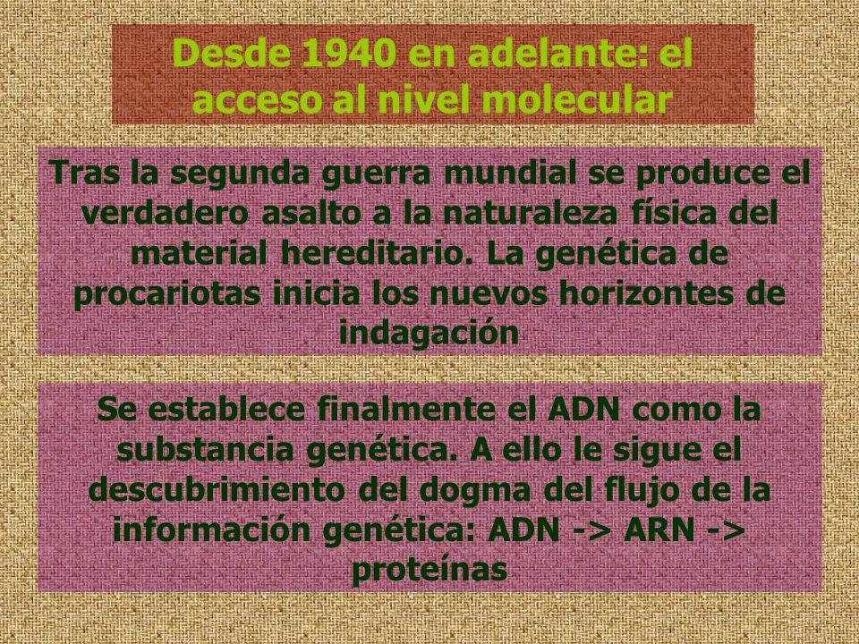 Desde 1940 en adelante: el acceso al nivel molecular