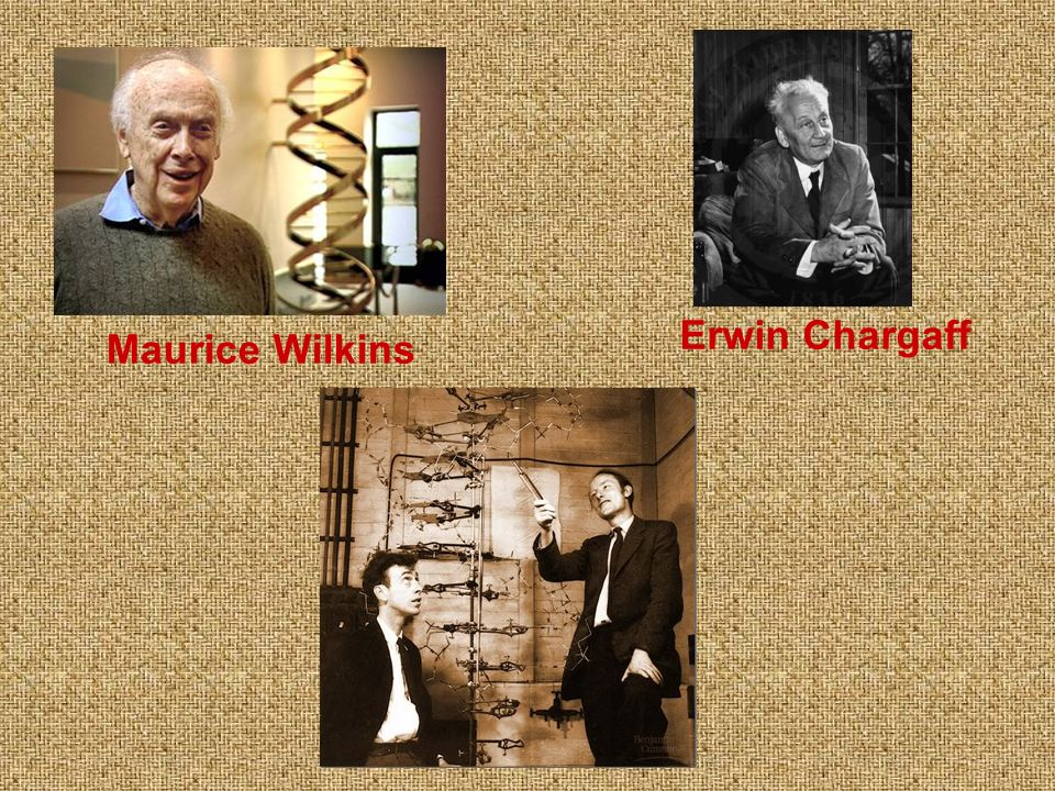 Erwin Chargaff Maurice Wilkins