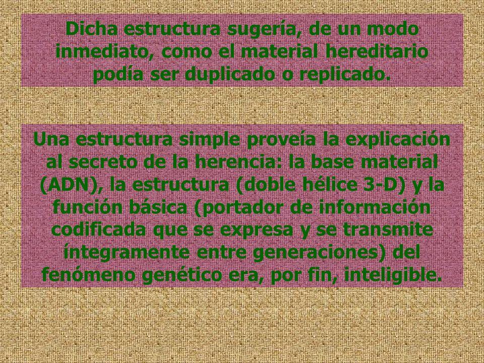 Dicha estructura sugería, de un modo inmediato, como el material hereditario podía ser duplicado o replicado.