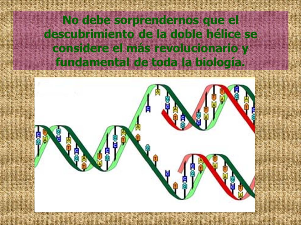 No debe sorprendernos que el descubrimiento de la doble hélice se considere el más revolucionario y fundamental de toda la biología.
