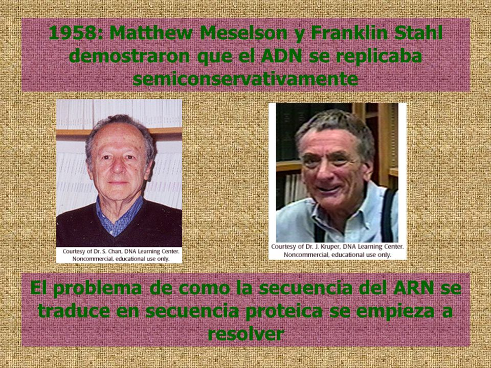 1958: Matthew Meselson y Franklin Stahl demostraron que el ADN se replicaba semiconservativamente