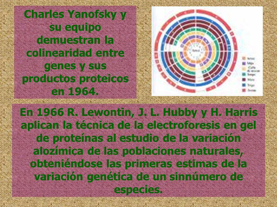 Charles Yanofsky y su equipo demuestran la colinearidad entre genes y sus productos proteicos en 1964.