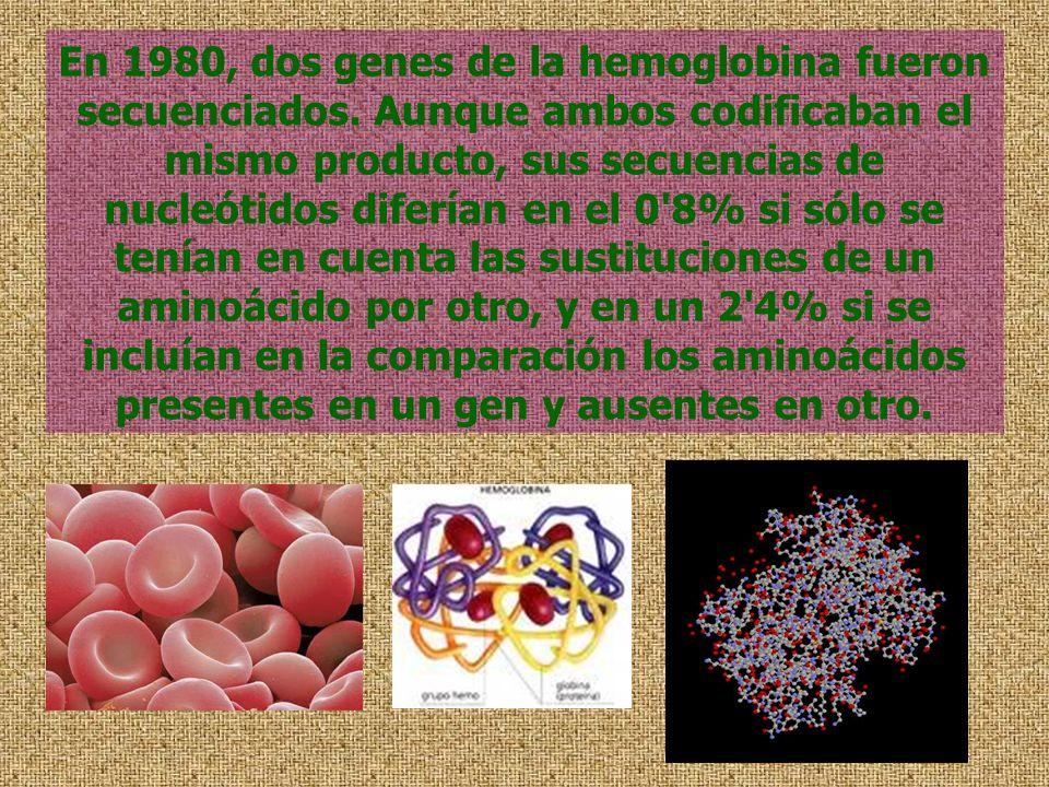 En 1980, dos genes de la hemoglobina fueron secuenciados