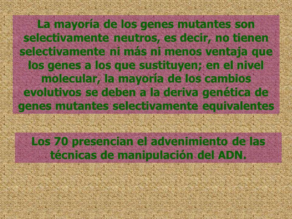La mayoría de los genes mutantes son selectivamente neutros, es decir, no tienen selectivamente ni más ni menos ventaja que los genes a los que sustituyen; en el nivel molecular, la mayoría de los cambios evolutivos se deben a la deriva genética de genes mutantes selectivamente equivalentes