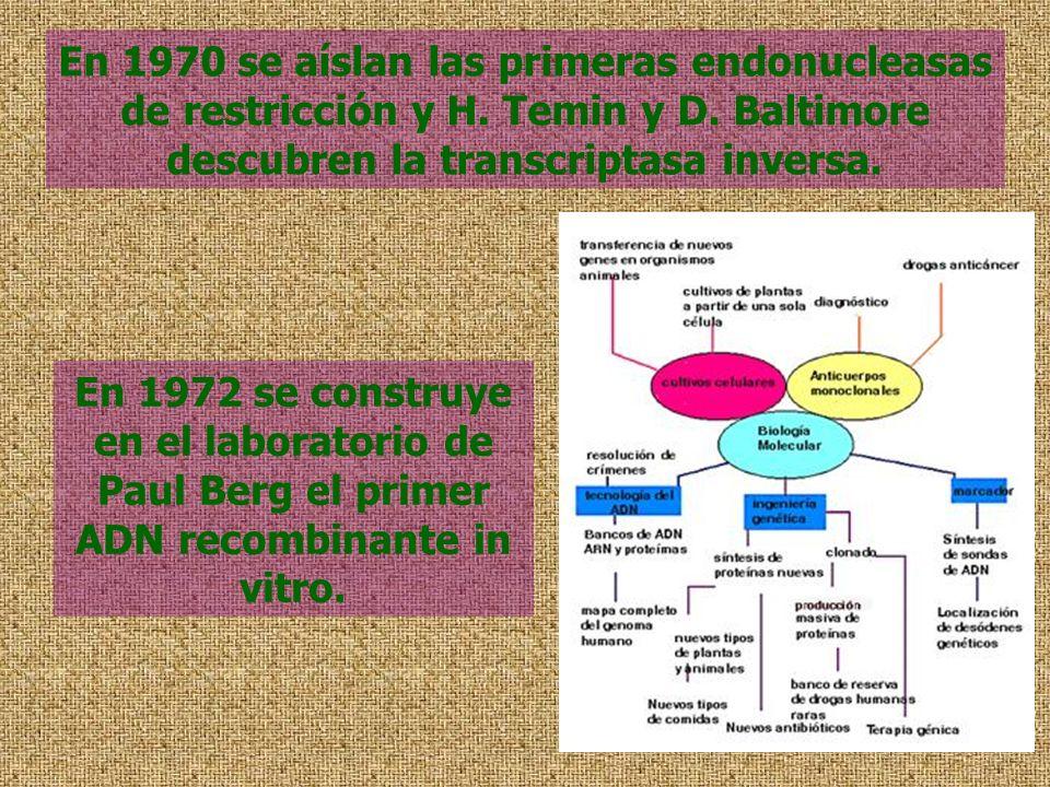 En 1970 se aíslan las primeras endonucleasas de restricción y H