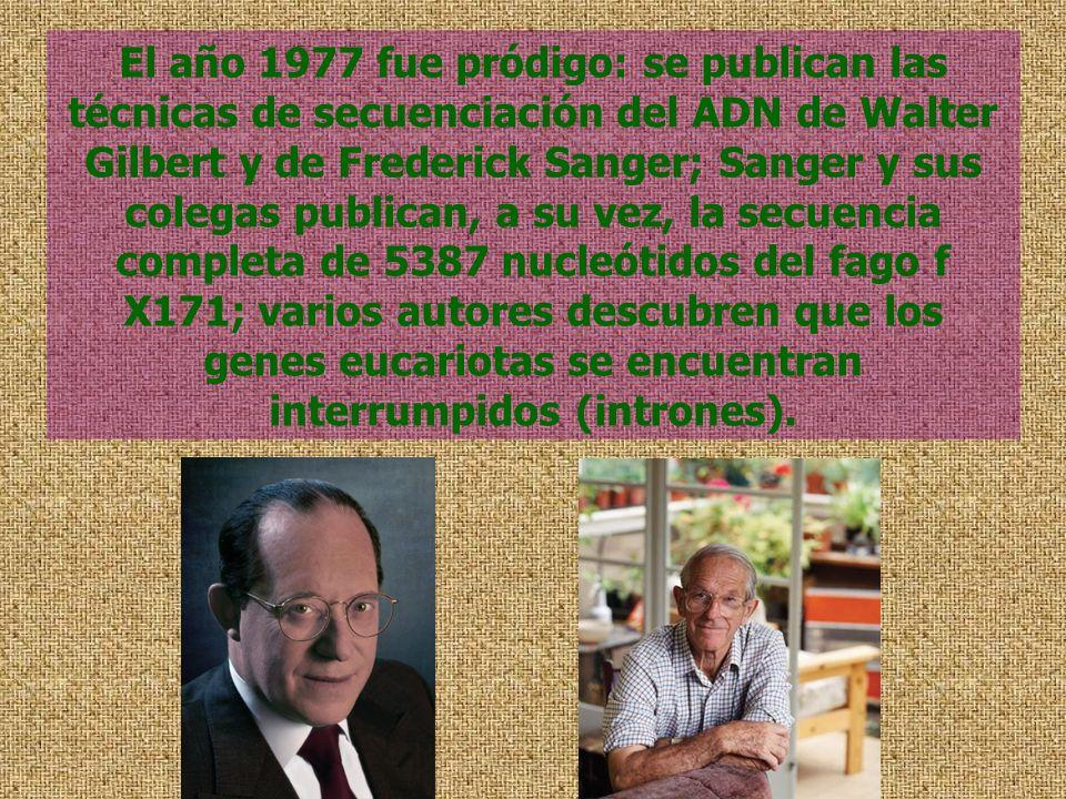 El año 1977 fue pródigo: se publican las técnicas de secuenciación del ADN de Walter Gilbert y de Frederick Sanger; Sanger y sus colegas publican, a su vez, la secuencia completa de 5387 nucleótidos del fago f X171; varios autores descubren que los genes eucariotas se encuentran interrumpidos (intrones).