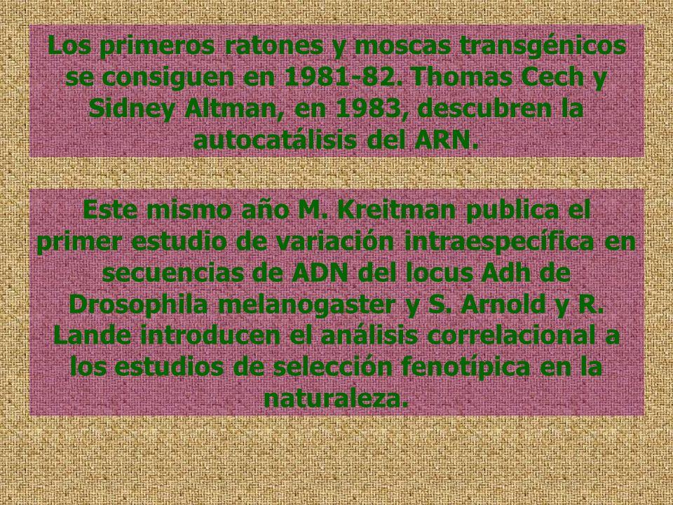 Los primeros ratones y moscas transgénicos se consiguen en 1981-82