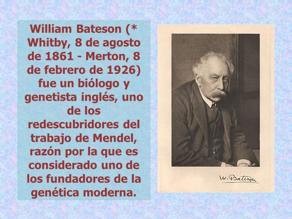 William Bateson (* Whitby, 8 de agosto de 1861 - Merton, 8 de febrero de 1926) fue un biólogo y genetista inglés, uno de los redescubridores del trabajo de Mendel, razón por la que es considerado uno de los fundadores de la genética moderna.
