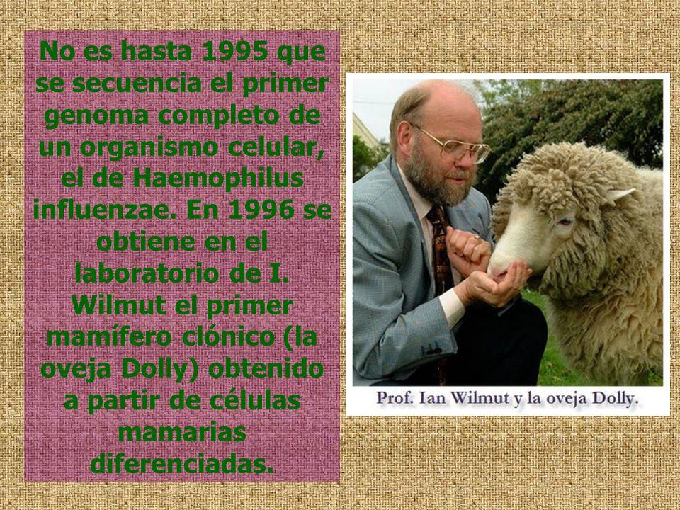 No es hasta 1995 que se secuencia el primer genoma completo de un organismo celular, el de Haemophilus influenzae.