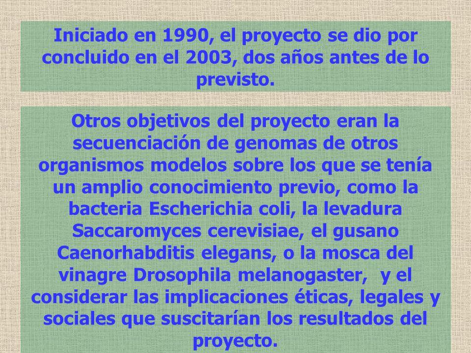 Iniciado en 1990, el proyecto se dio por concluido en el 2003, dos años antes de lo previsto.