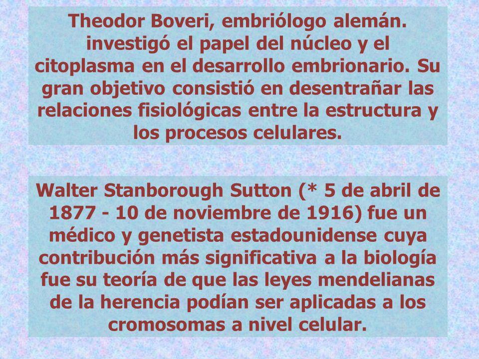 Theodor Boveri, embriólogo alemán
